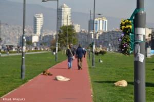 Izmir/Turkey